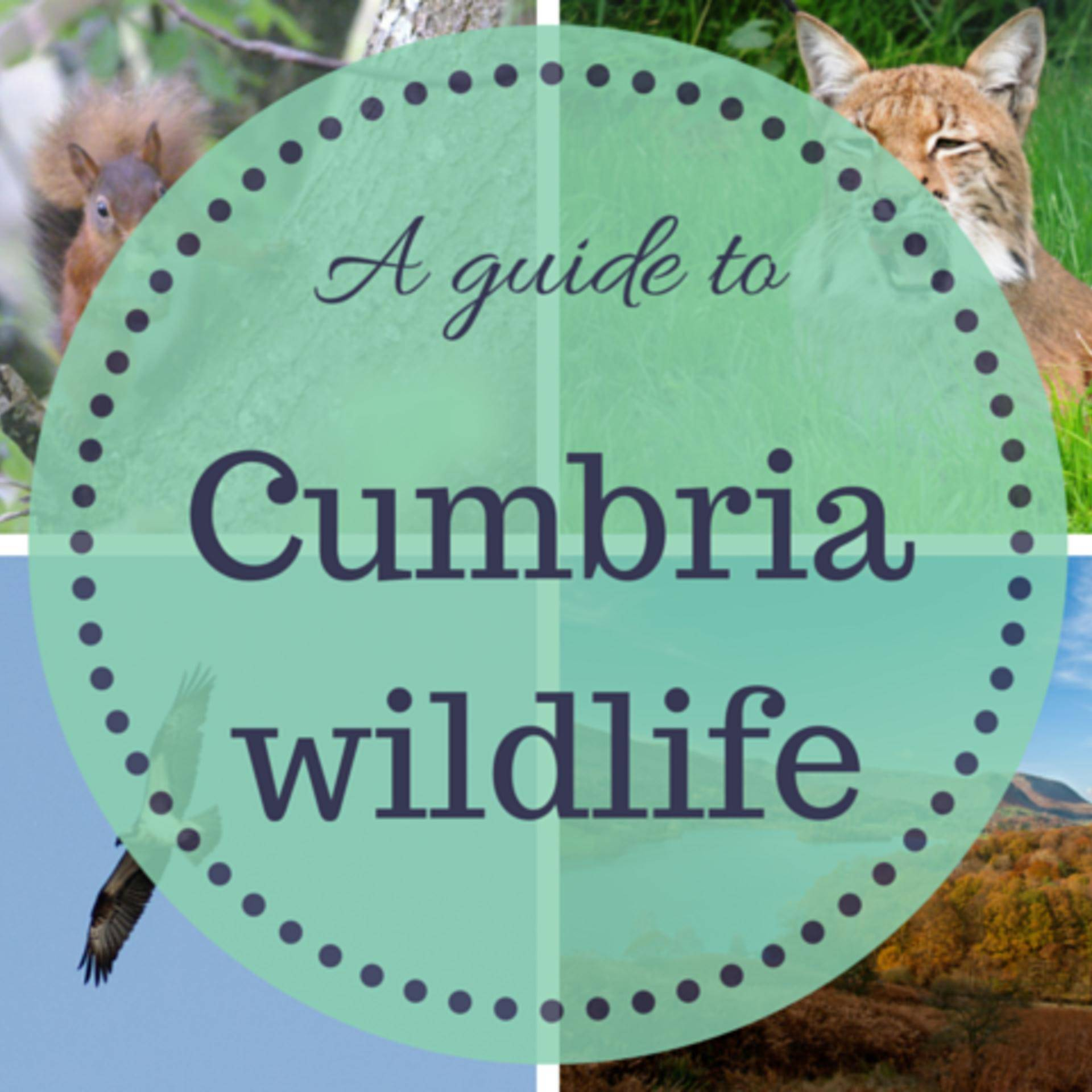 Cumbria wildlife